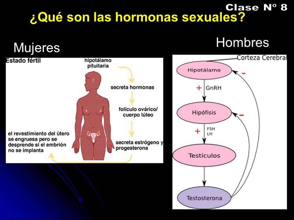 Clase Nº 8 ¿Qué son las hormonas sexuales Hombres Mujeres