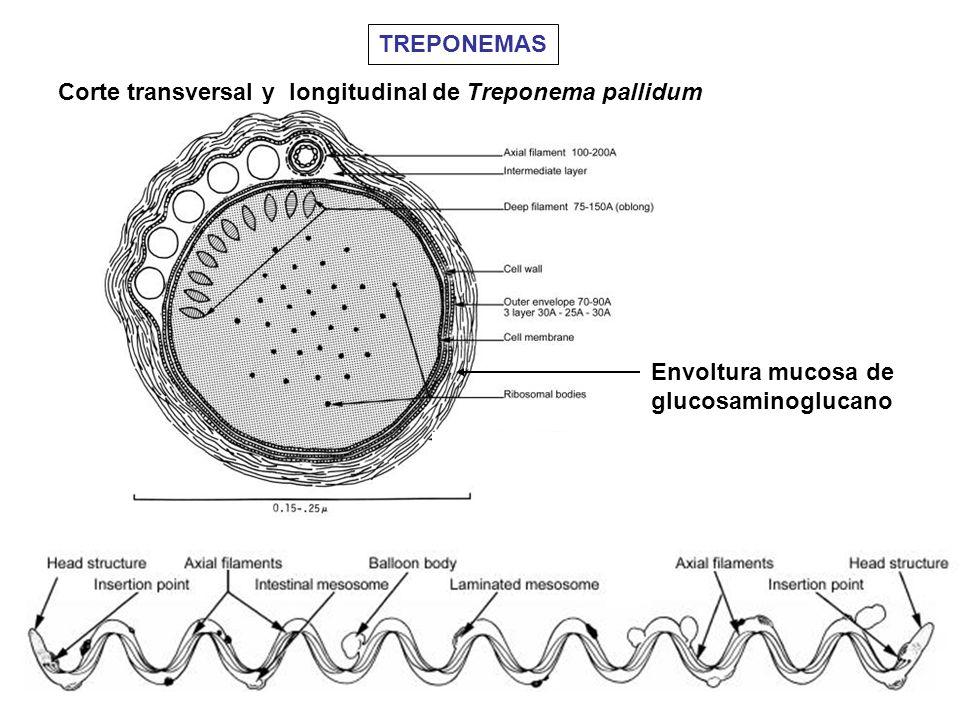 Envoltura mucosa de glucosaminoglucano