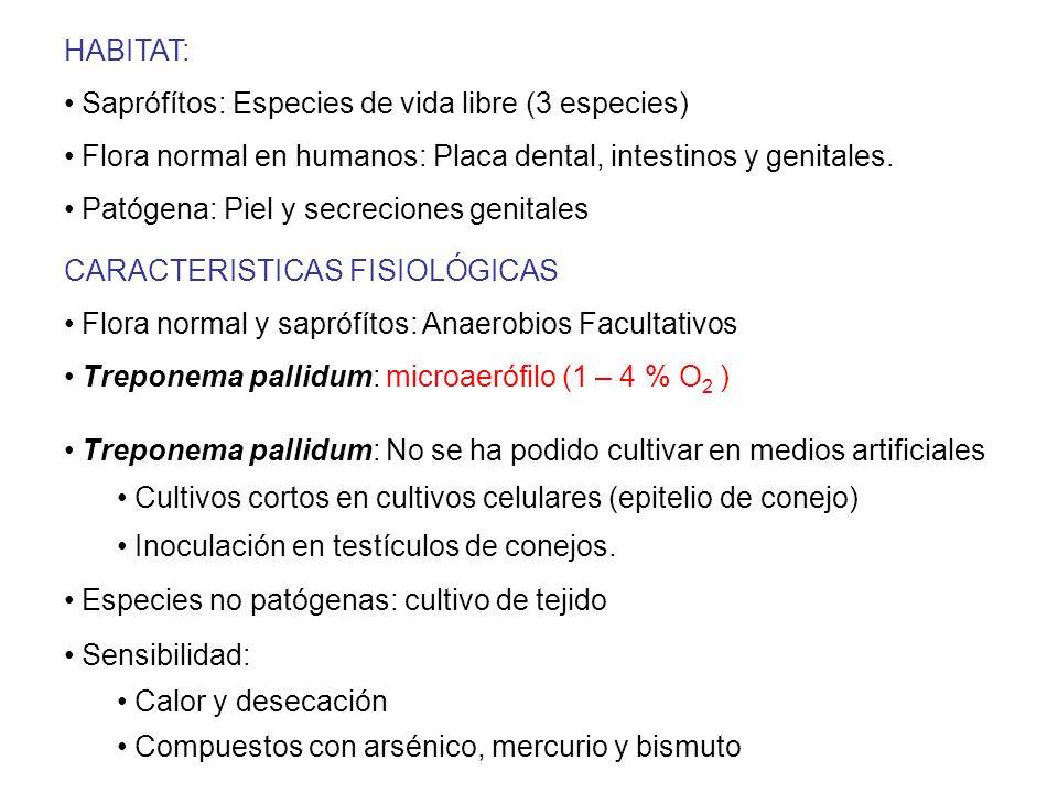 HABITAT: Saprófítos: Especies de vida libre (3 especies) Flora normal en humanos: Placa dental, intestinos y genitales.
