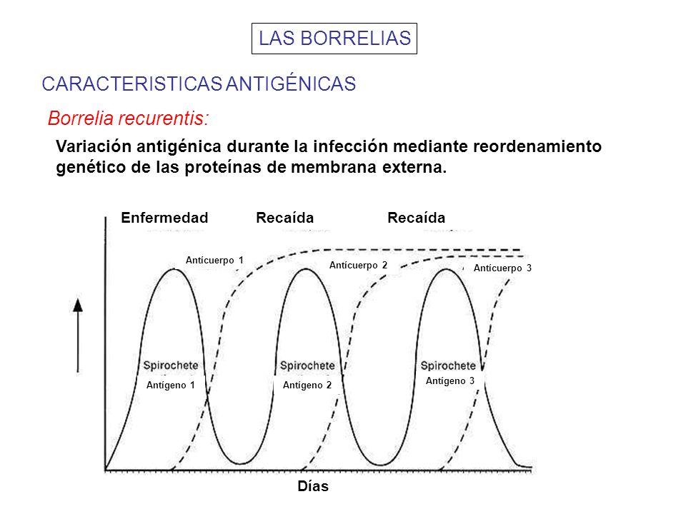 CARACTERISTICAS ANTIGÉNICAS