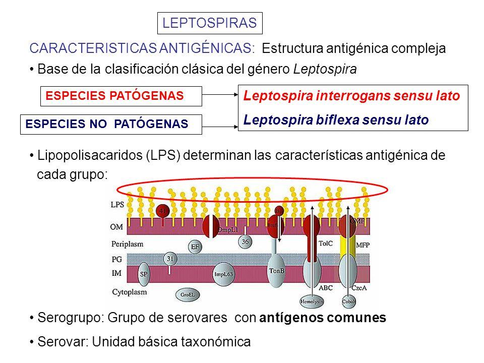 CARACTERISTICAS ANTIGÉNICAS: Estructura antigénica compleja