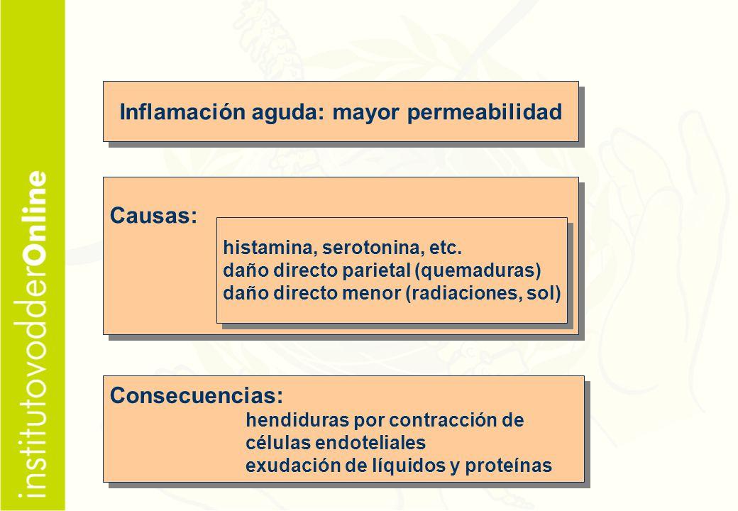 Inflamación aguda: mayor permeabilidad