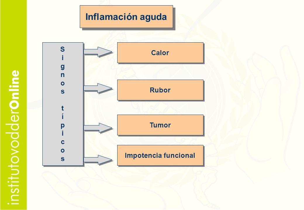 Inflamación aguda S Calor i g n o s t í p Rubor c Tumor