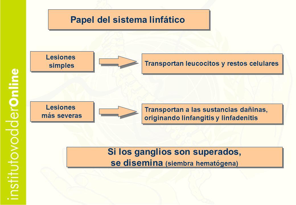 Papel del sistema linfático