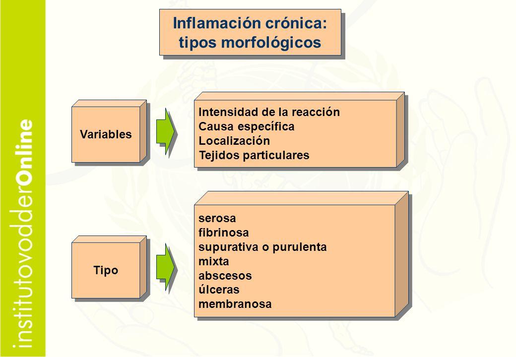 Inflamación crónica: tipos morfológicos