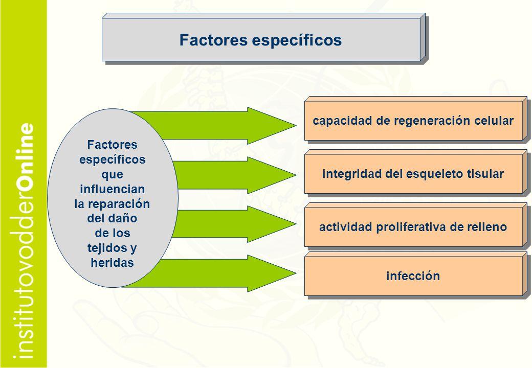 Factores específicos capacidad de regeneración celular Factores