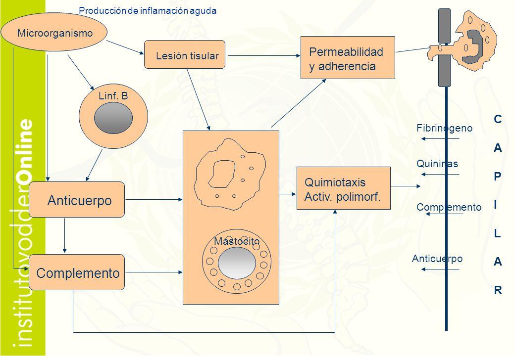 Producción de inflamación aguda