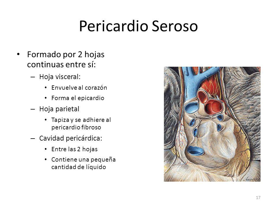 Pericardio Seroso Formado por 2 hojas continuas entre sí: