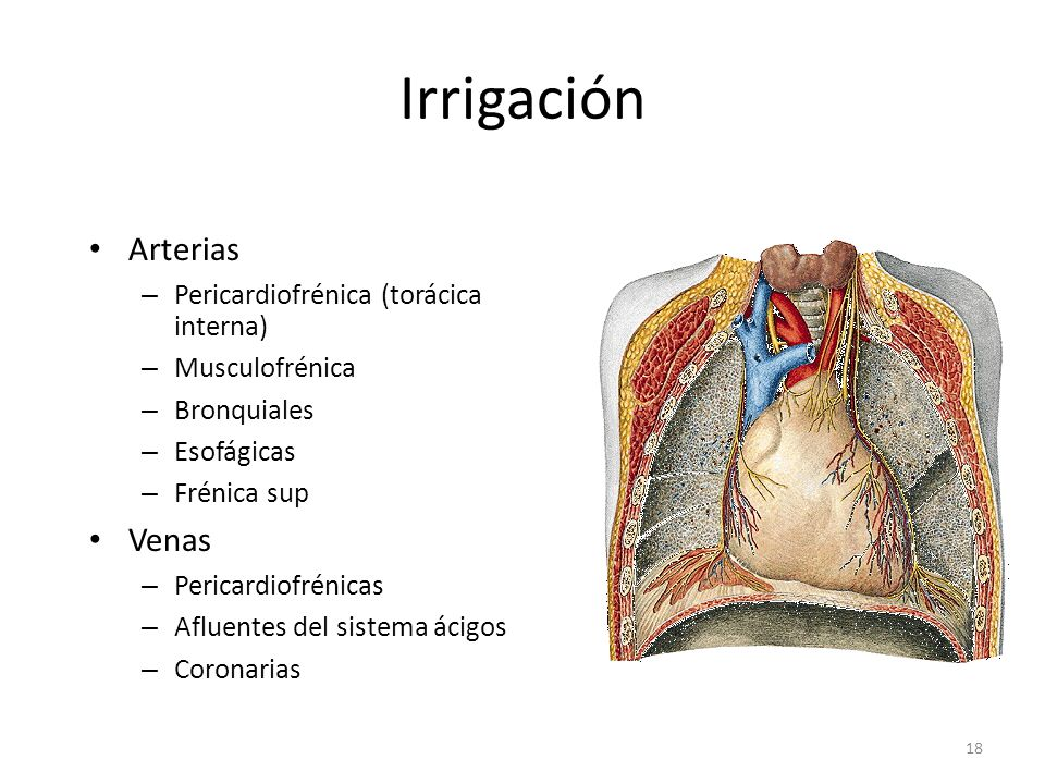 Irrigación Arterias Venas Pericardiofrénica (torácica interna)