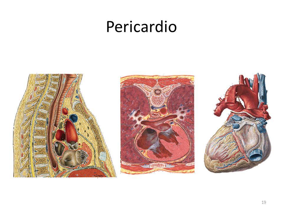 Pericardio
