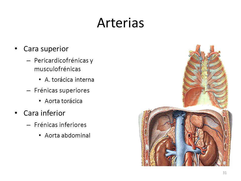 Arterias Cara superior Cara inferior