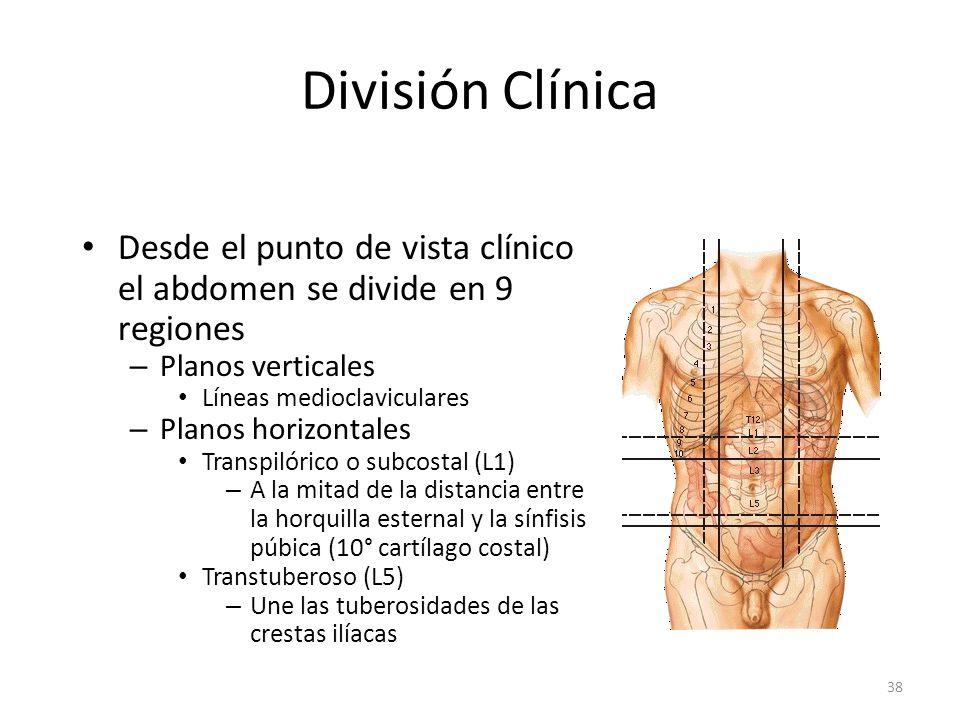 División Clínica Desde el punto de vista clínico el abdomen se divide en 9 regiones. Planos verticales.