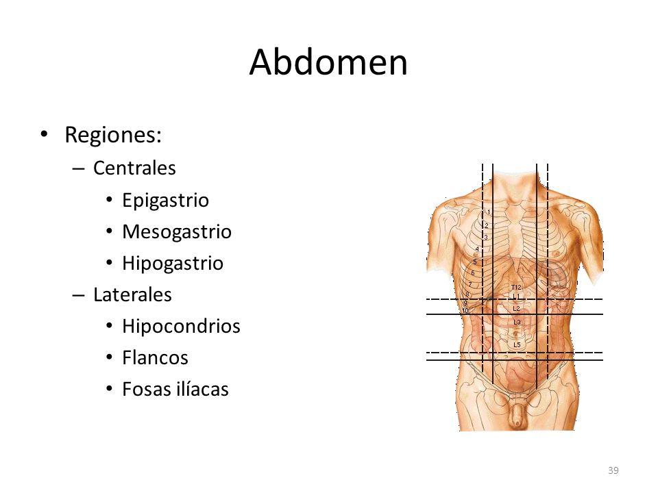 Abdomen Regiones: Centrales Epigastrio Mesogastrio Hipogastrio