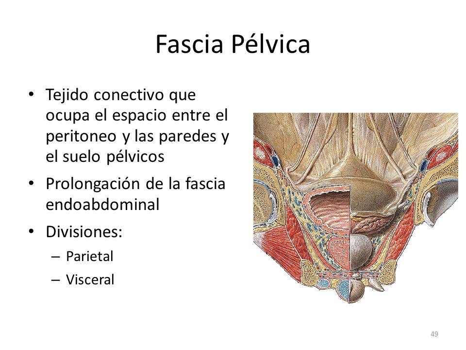 Fascia Pélvica Tejido conectivo que ocupa el espacio entre el peritoneo y las paredes y el suelo pélvicos.