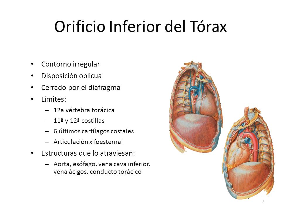 Orificio Inferior del Tórax