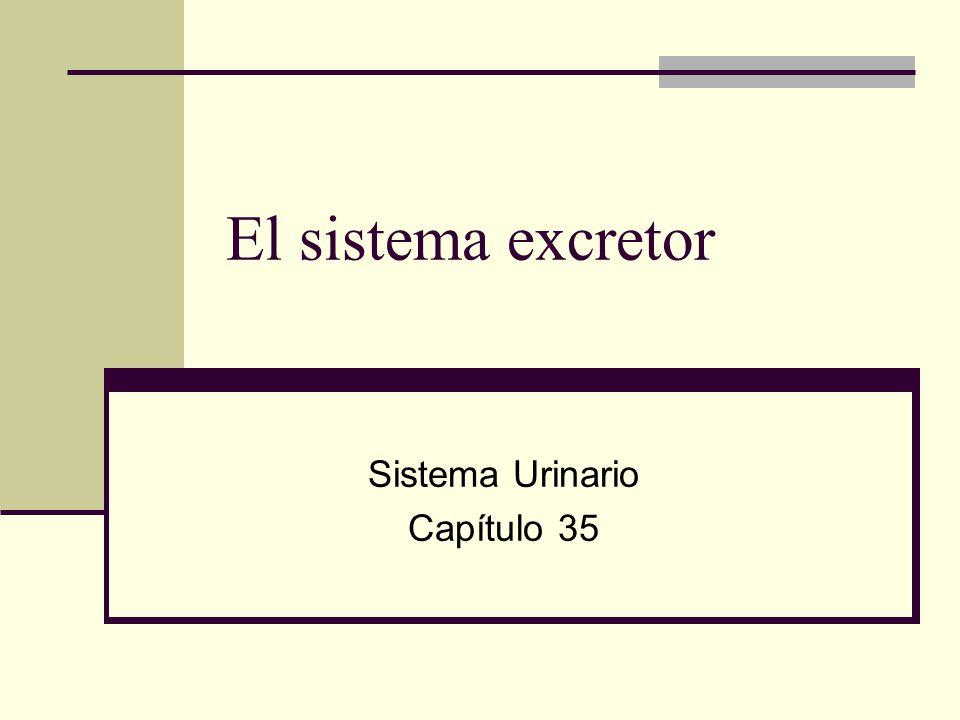 Sistema Urinario Capítulo 35