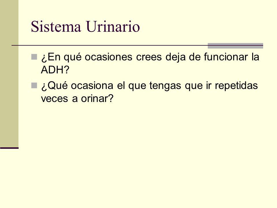 Sistema Urinario ¿En qué ocasiones crees deja de funcionar la ADH