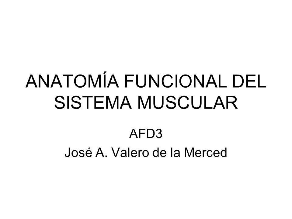 ANATOMÍA FUNCIONAL DEL SISTEMA MUSCULAR