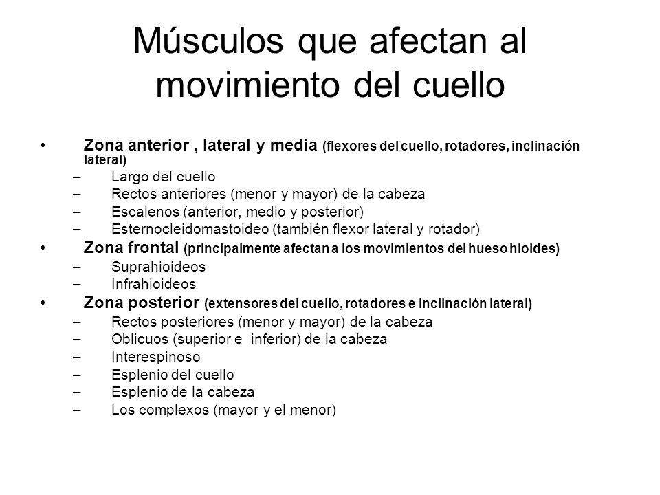 Músculos que afectan al movimiento del cuello