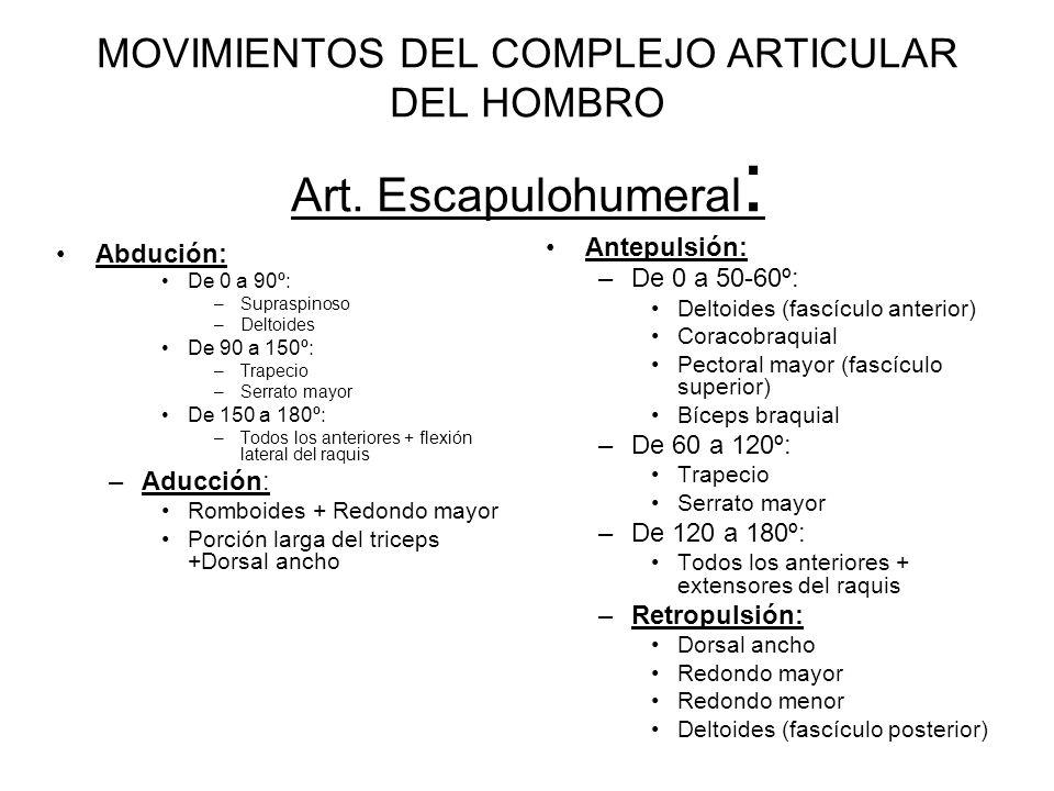MOVIMIENTOS DEL COMPLEJO ARTICULAR DEL HOMBRO Art. Escapulohumeral: