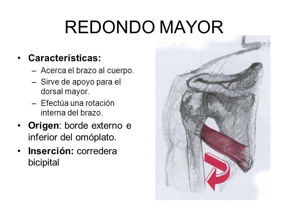 REDONDO MAYOR Características: