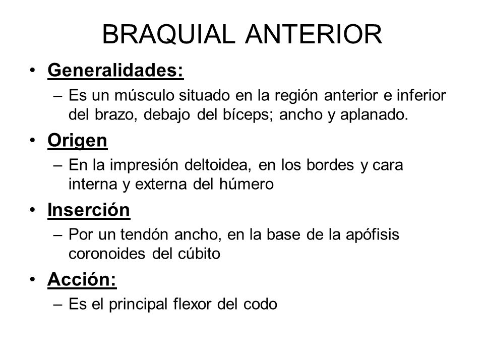 BRAQUIAL ANTERIOR Generalidades: Origen Inserción Acción: