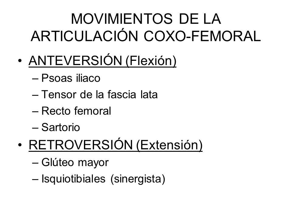 MOVIMIENTOS DE LA ARTICULACIÓN COXO-FEMORAL