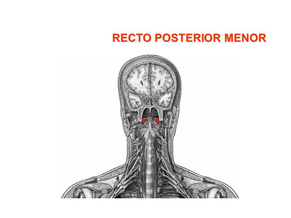 RECTO POSTERIOR MENOR