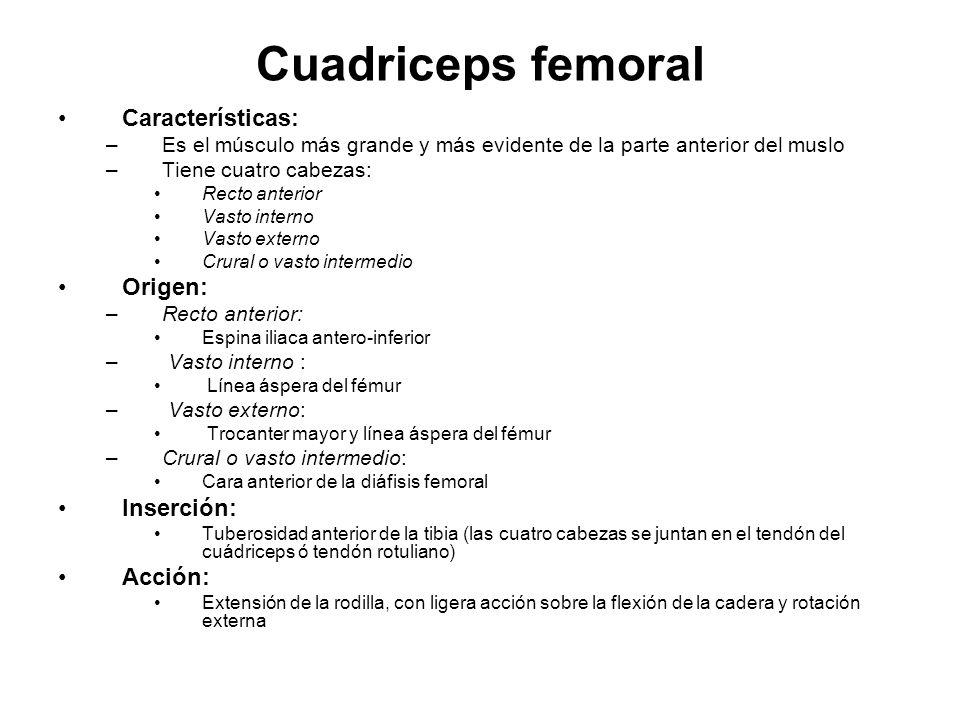 Cuadriceps femoral Características: Origen: Inserción: Acción: