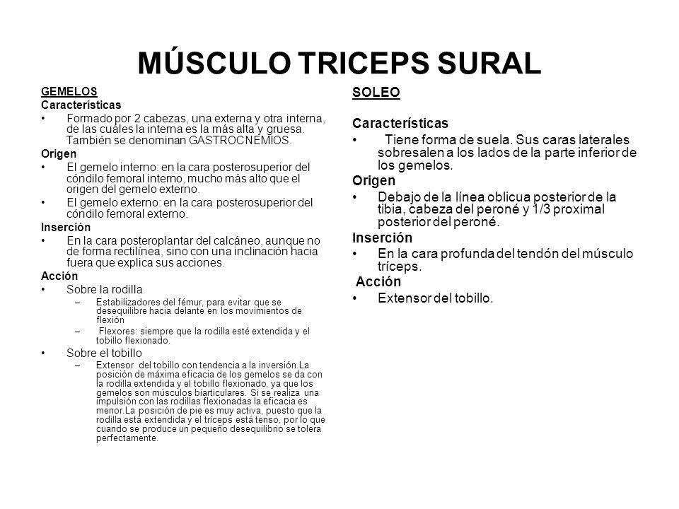 MÚSCULO TRICEPS SURAL SOLEO Características