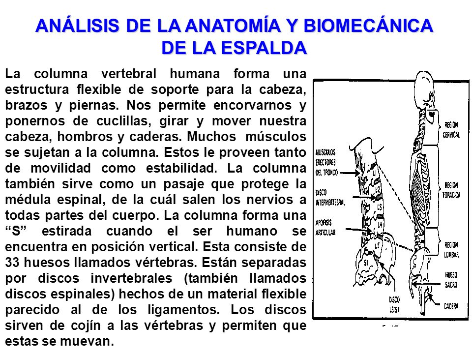 ANÁLISIS DE LA ANATOMÍA Y BIOMECÁNICA DE LA ESPALDA