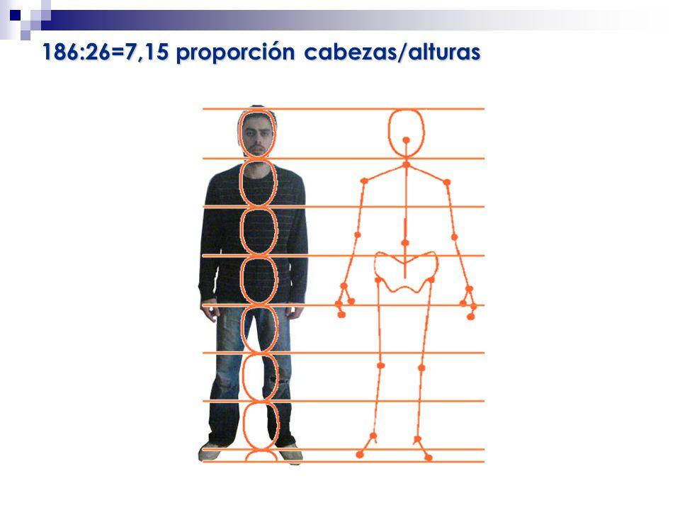 186:26=7,15 proporción cabezas/alturas