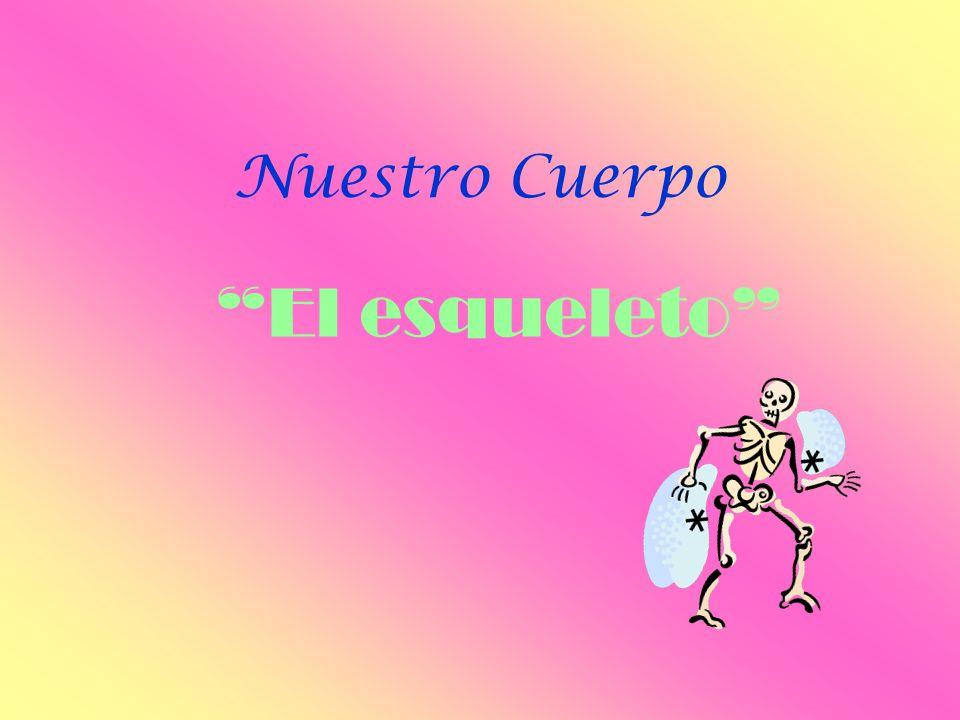 Nuestro Cuerpo El esqueleto