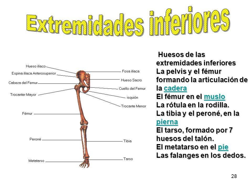 Increíble Huesos De Las Extremidades Inferiores Inspiración ...