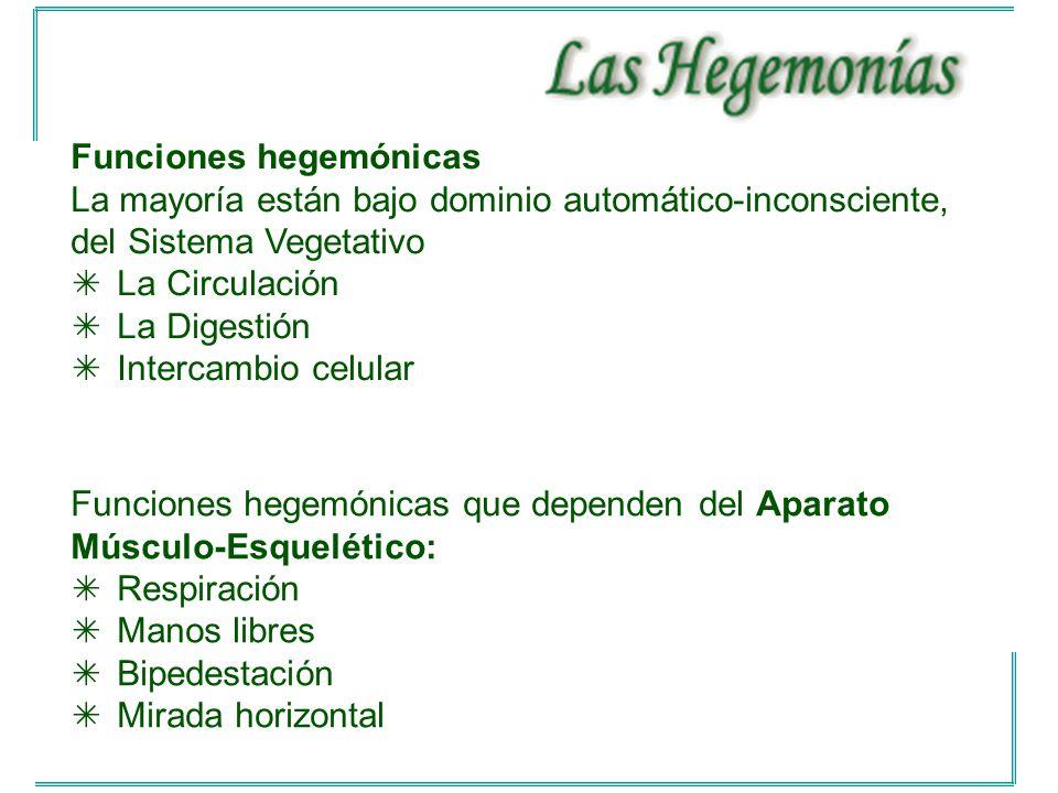 Funciones hegemónicas