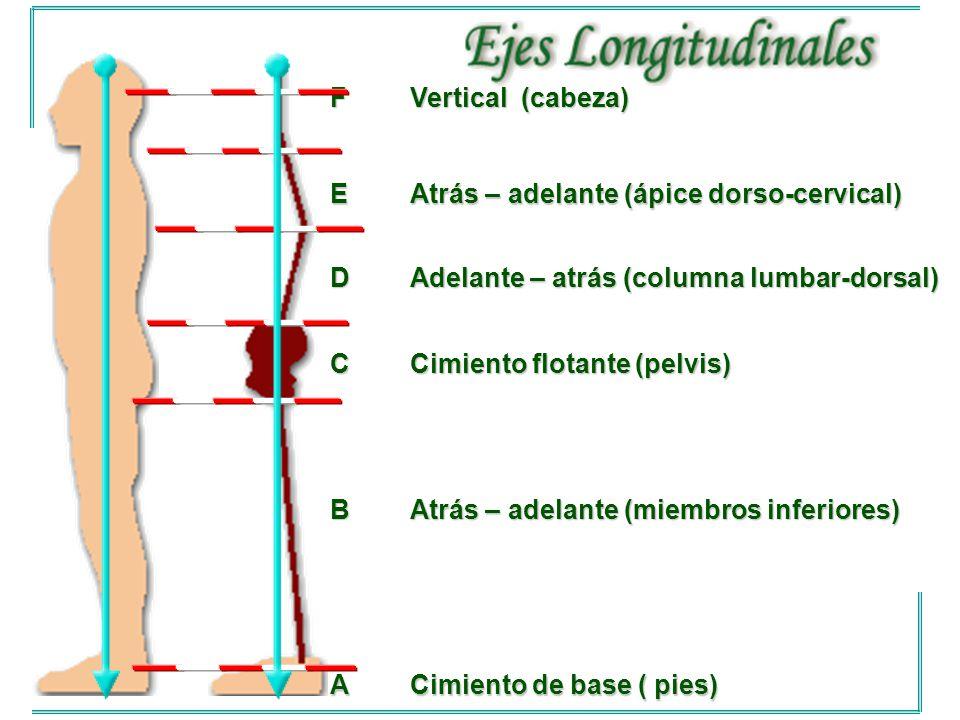 F Vertical (cabeza) E. Atrás – adelante (ápice dorso-cervical) D. Adelante – atrás (columna lumbar-dorsal)