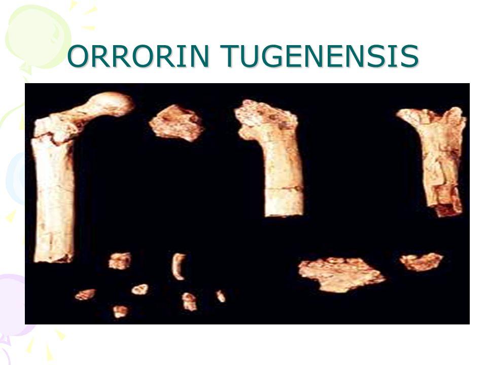 ORRORIN TUGENENSIS