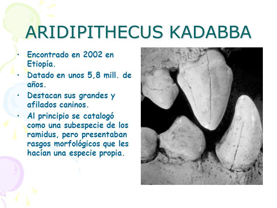 ARIDIPITHECUS KADABBA
