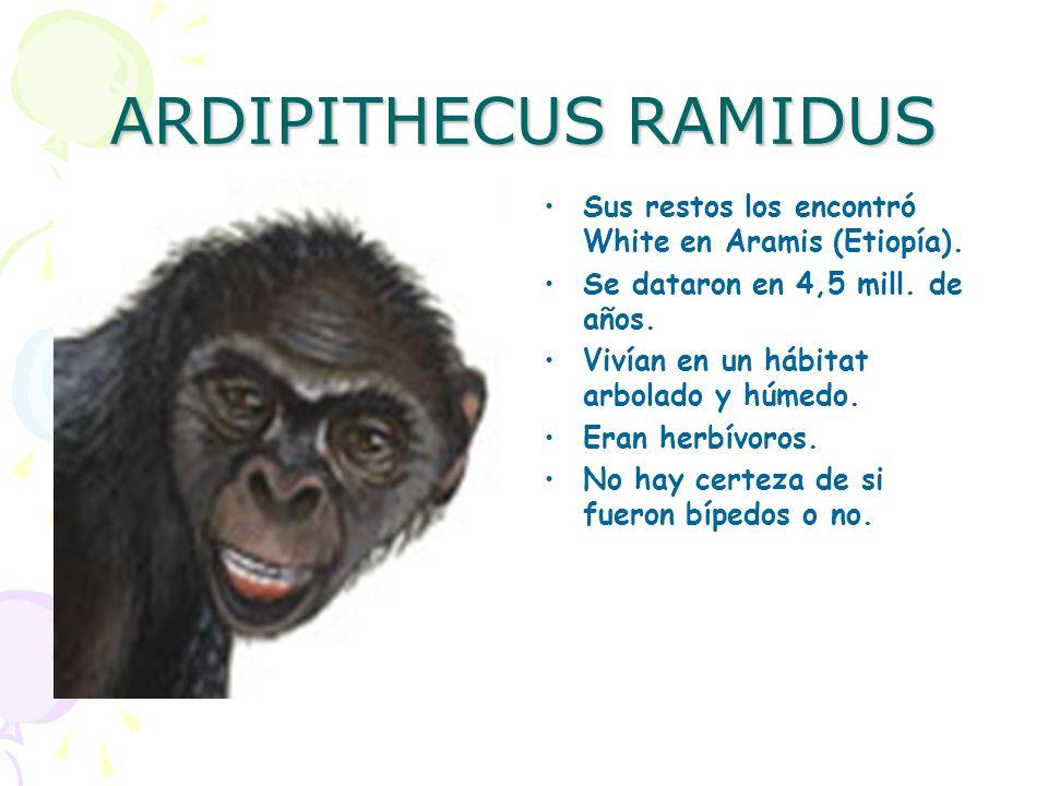 ARDIPITHECUS RAMIDUS Sus restos los encontró White en Aramis (Etiopía). Se dataron en 4,5 mill. de años.