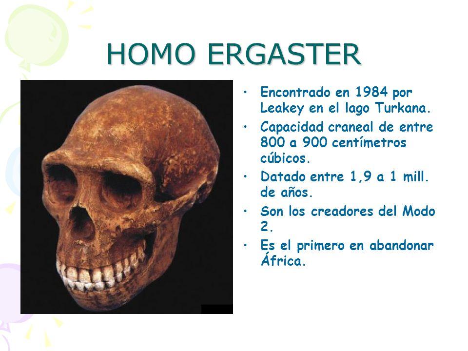 HOMO ERGASTER Encontrado en 1984 por Leakey en el lago Turkana.