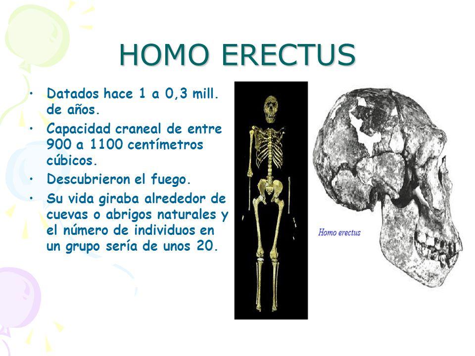 HOMO ERECTUS Datados hace 1 a 0,3 mill. de años.
