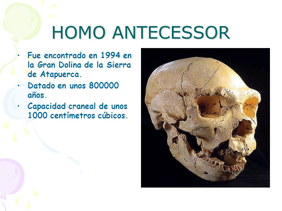 HOMO ANTECESSOR Fue encontrado en 1994 en la Gran Dolina de la Sierra de Atapuerca. Datado en unos 800000 años.