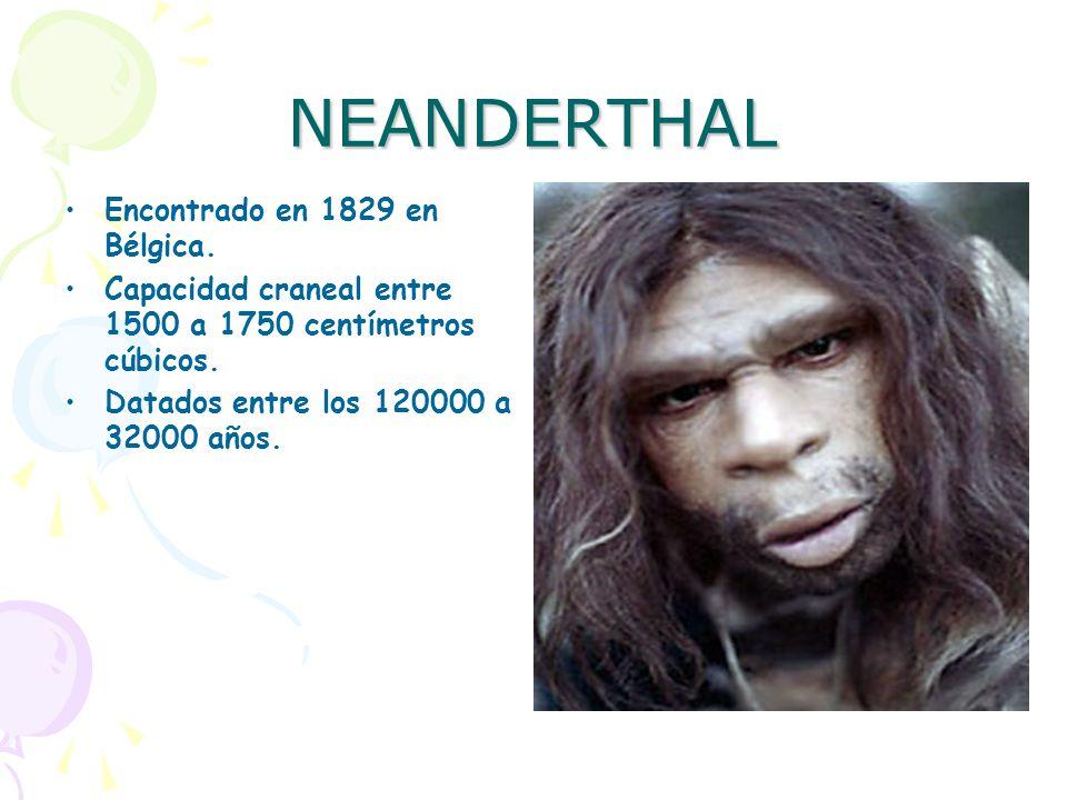 NEANDERTHAL Encontrado en 1829 en Bélgica.