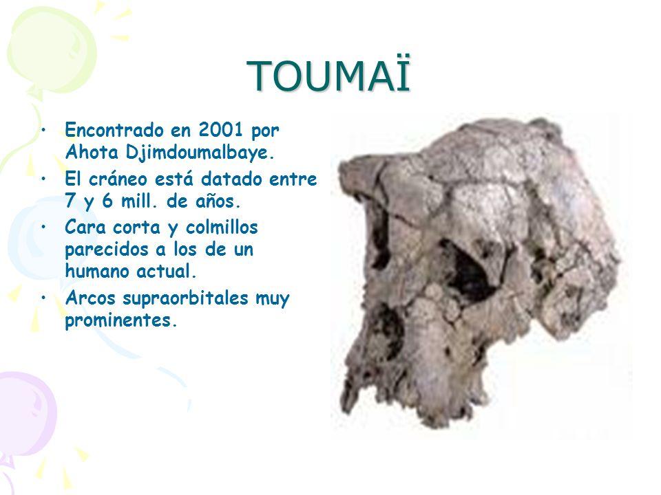 TOUMAÏ Encontrado en 2001 por Ahota Djimdoumalbaye.