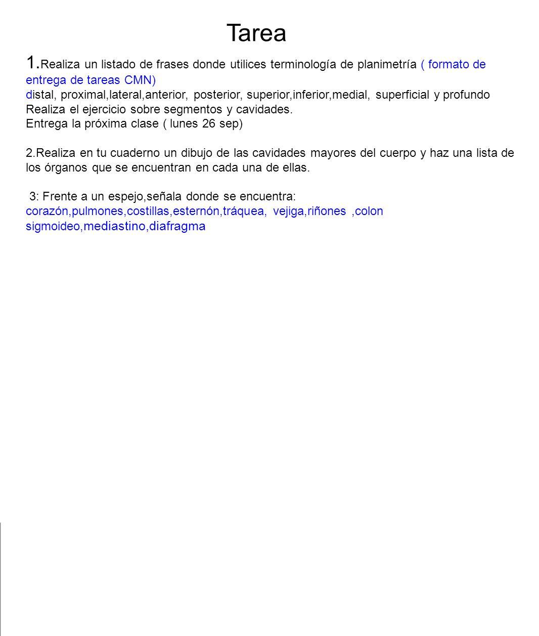 Tarea 1.Realiza un listado de frases donde utilices terminología de planimetría ( formato de entrega de tareas CMN)