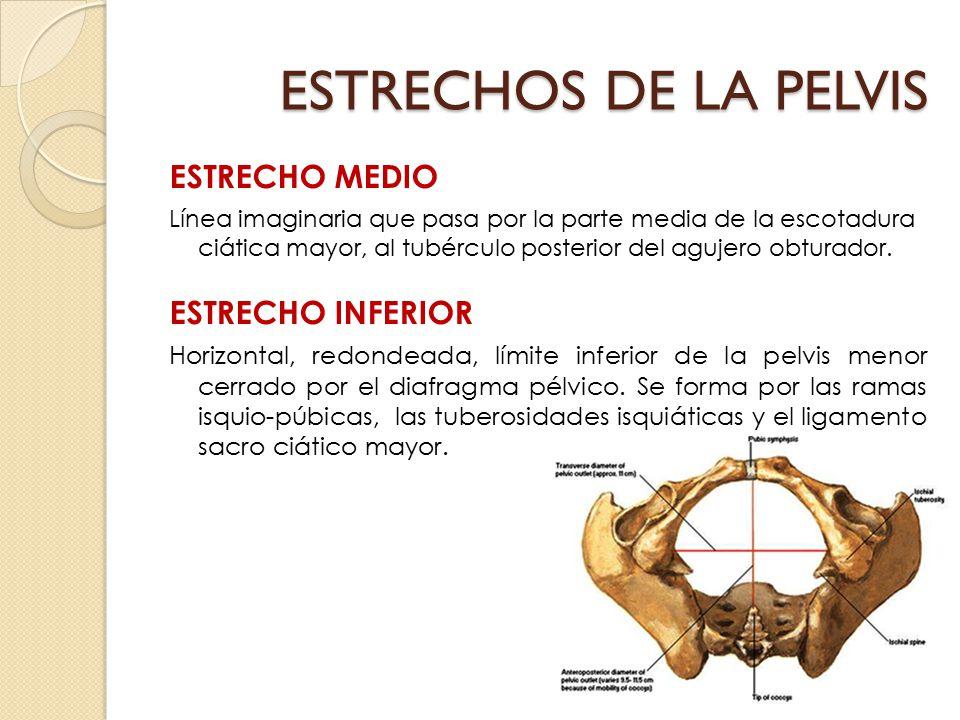 ESTRECHOS DE LA PELVIS ESTRECHO MEDIO ESTRECHO INFERIOR