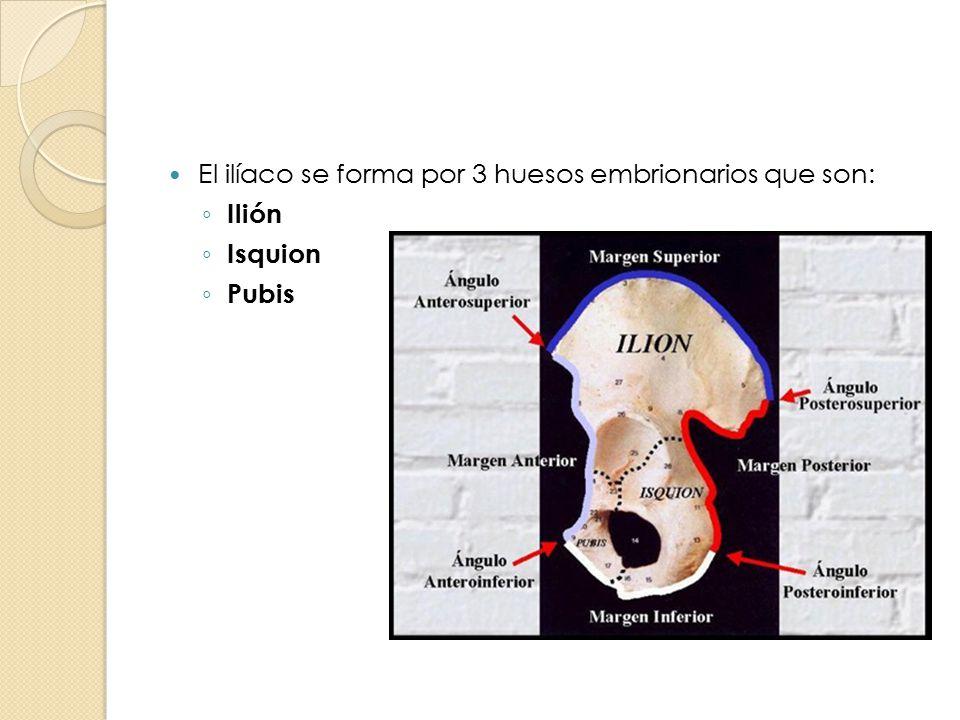 El ilíaco se forma por 3 huesos embrionarios que son: