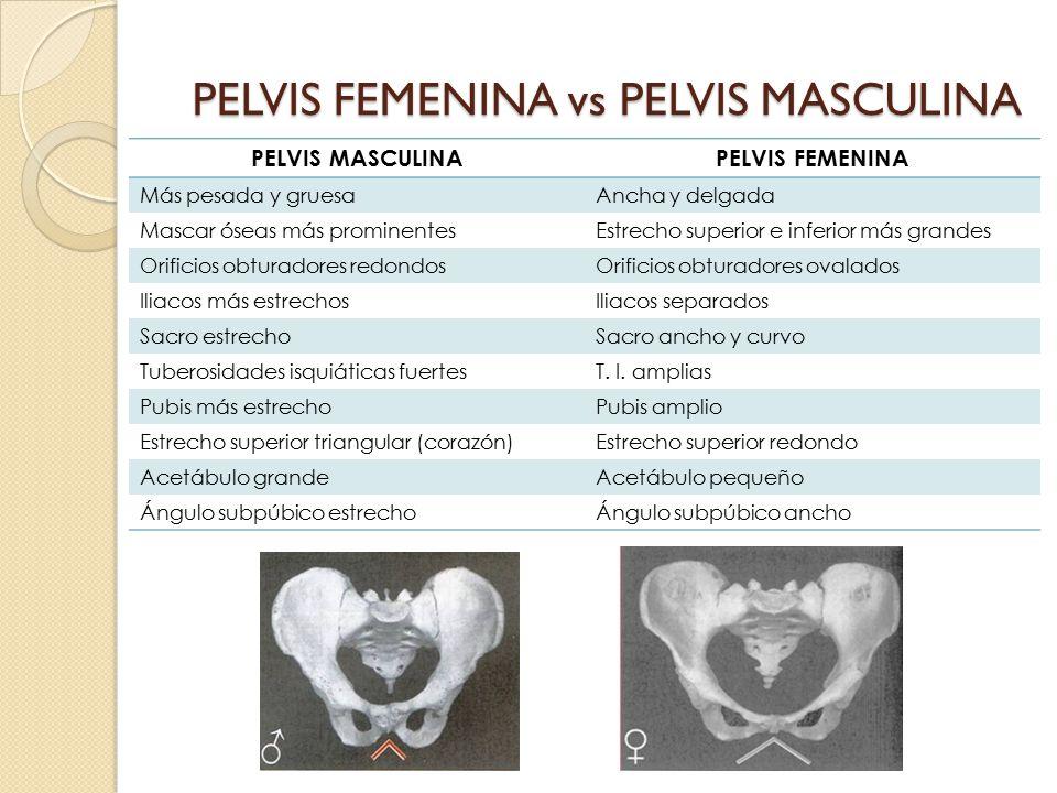 PELVIS FEMENINA vs PELVIS MASCULINA