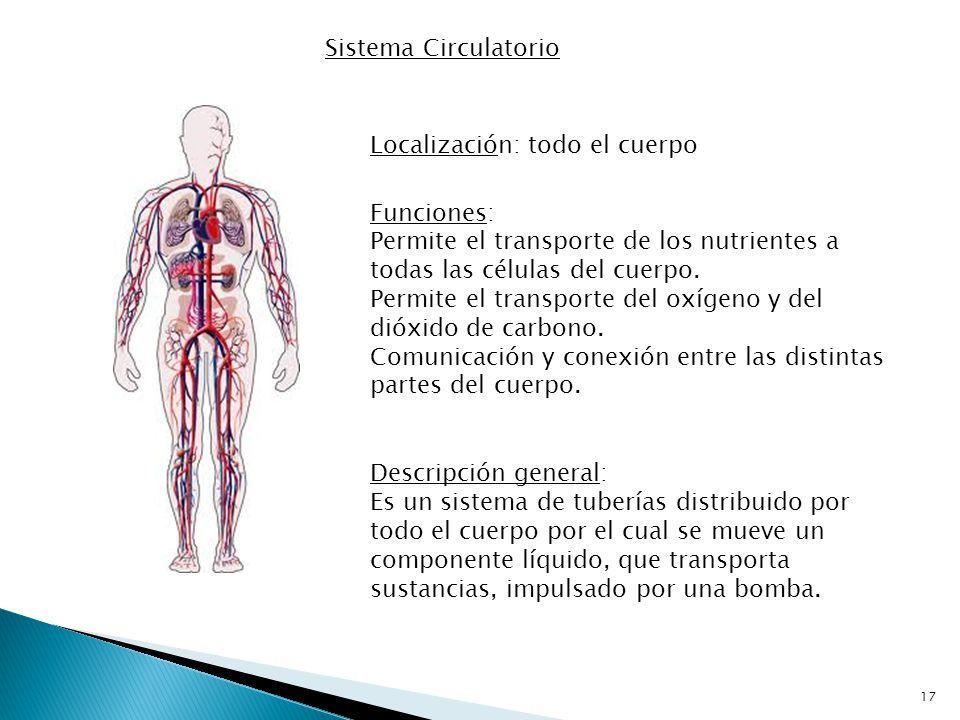 Sistema Circulatorio Localización: todo el cuerpo. Funciones: Permite el transporte de los nutrientes a todas las células del cuerpo.