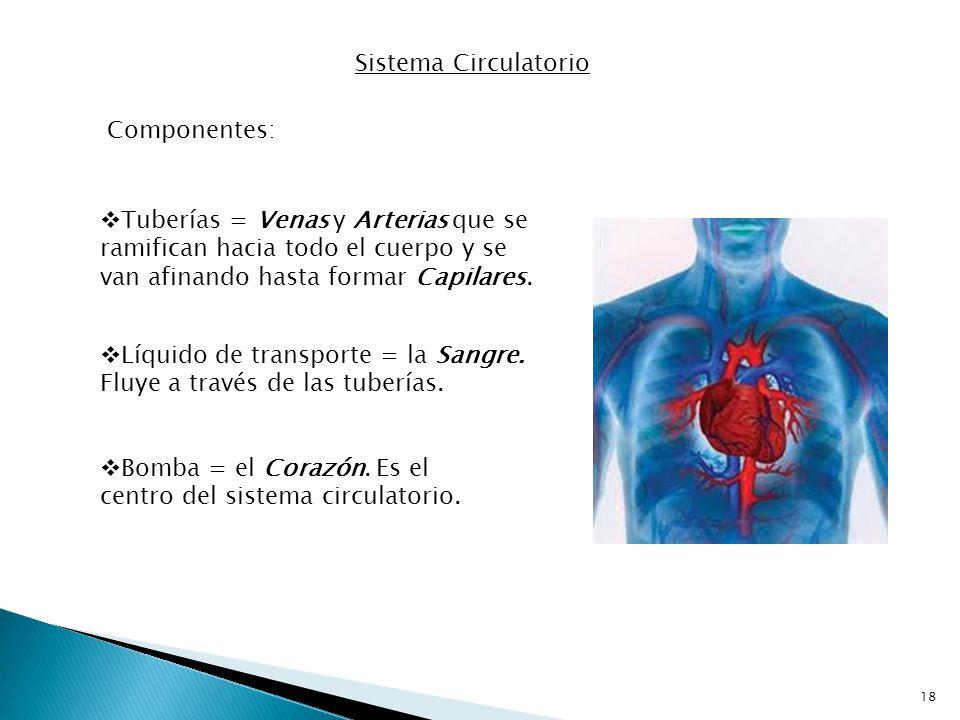 Sistema Circulatorio Componentes: Tuberías = Venas y Arterias que se ramifican hacia todo el cuerpo y se van afinando hasta formar Capilares.